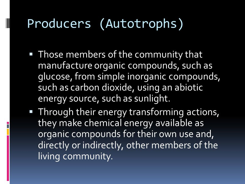 Producers (Autotrophs)