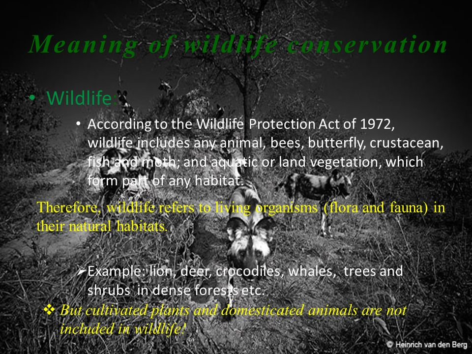 Meaning of wildlife conservation