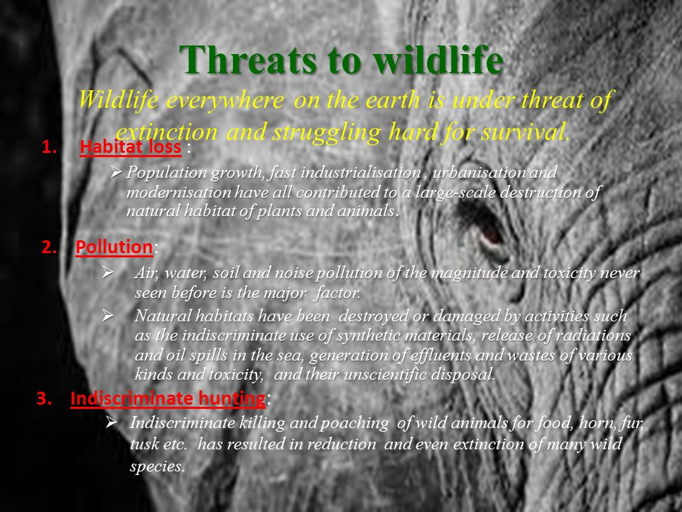 Threats to wildlife Wildlife everywhere on the earth is under threat of extinction and struggling hard for survival.