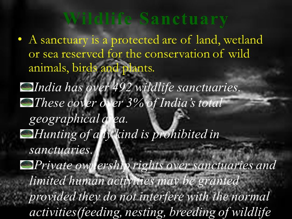 Wildlife Sanctuary A sanctuary is a protected are of land, wetland or sea reserved for the conservation of wild animals, birds and plants.