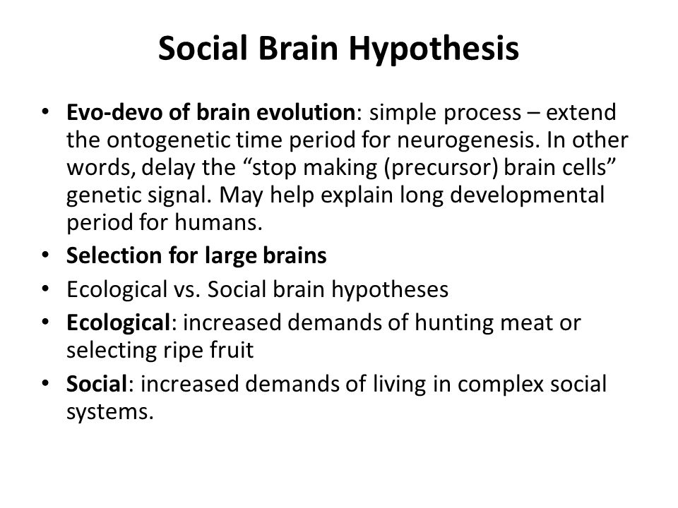 compare the social brain hypothesis and Articles the social brain hypothesis robin im dunbar the concensus view has tradition-ally been that brains evolved to pro-cess information of ecological rel.