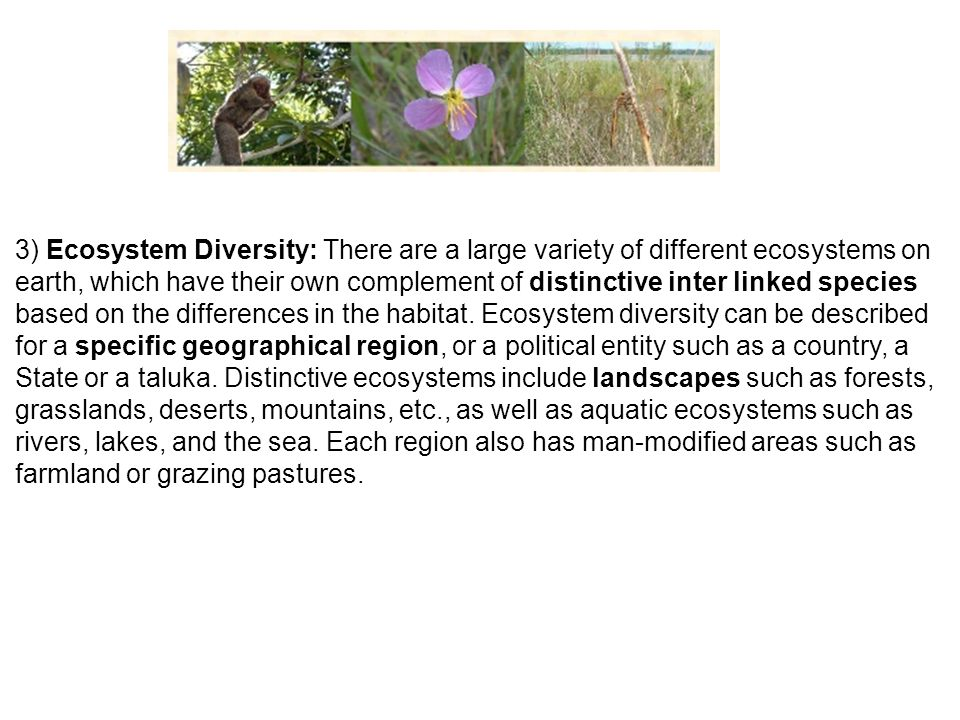 3) Ecosystem Diversity: There are a large variety of different ecosystems on earth, which have their own complement of distinctive inter linked species based on the differences in the habitat.