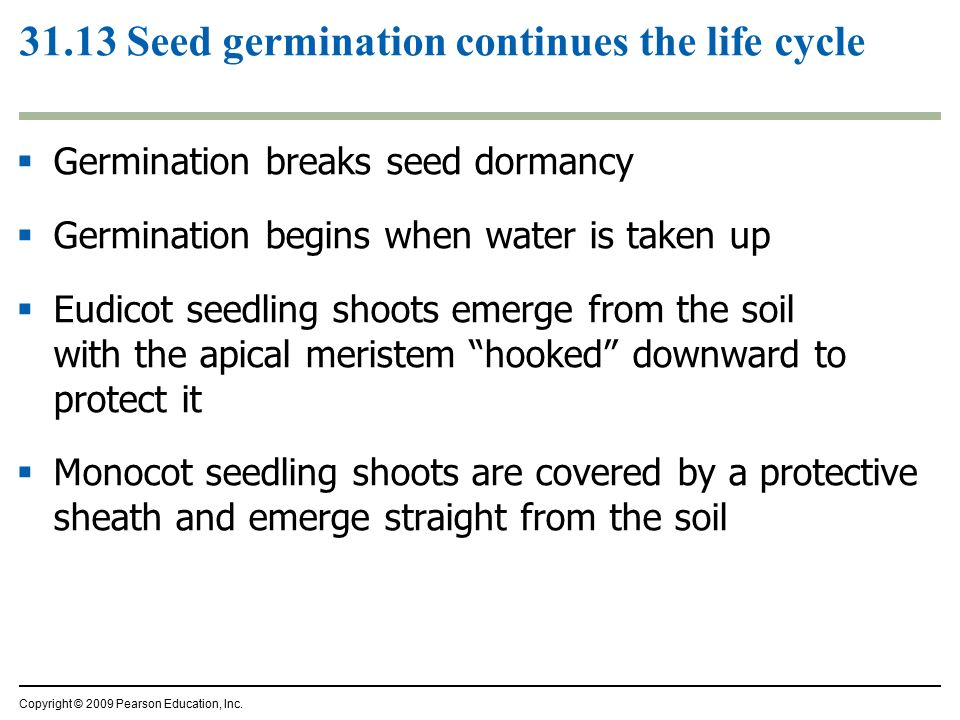 Reproduction of flowering plants ppt download for Soil life cycle