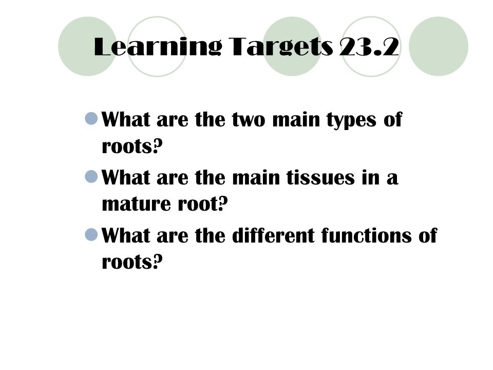 Learning Targets 23.2 What are the two main types of roots