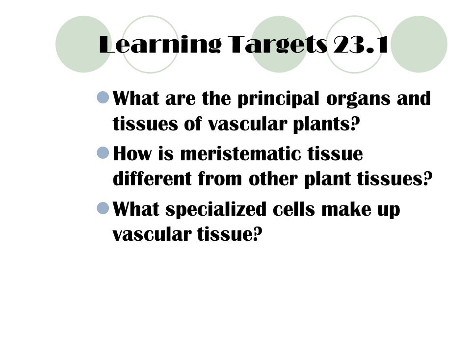 Learning Targets 23.1 What are the principal organs and tissues of vascular plants How is meristematic tissue different from other plant tissues