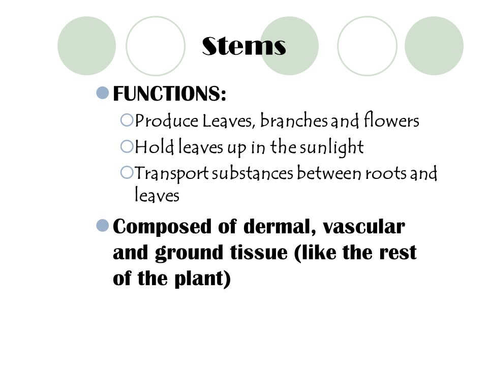 Stems FUNCTIONS: Produce Leaves, branches and flowers. Hold leaves up in the sunlight. Transport substances between roots and leaves.