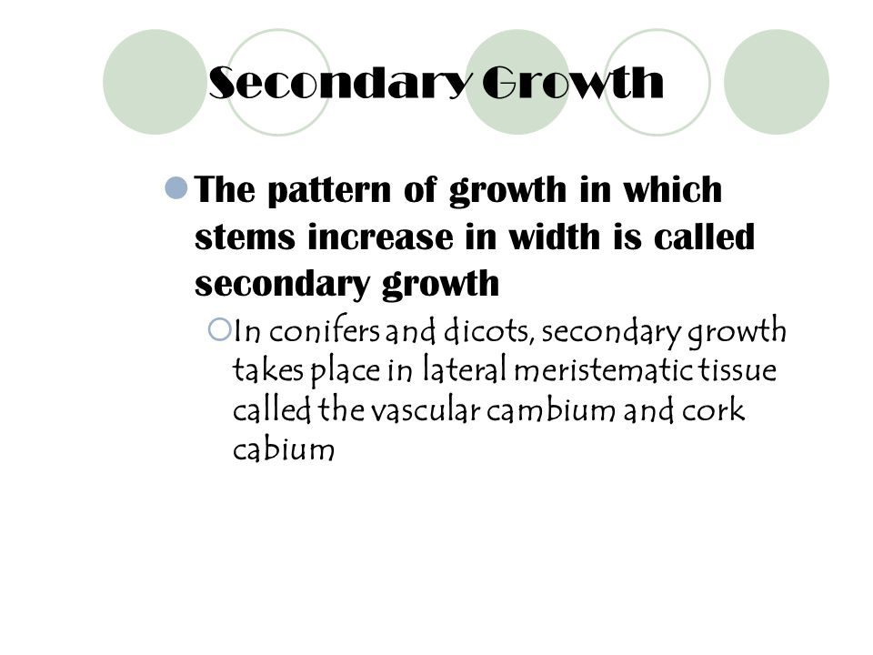 Secondary Growth The pattern of growth in which stems increase in width is called secondary growth.