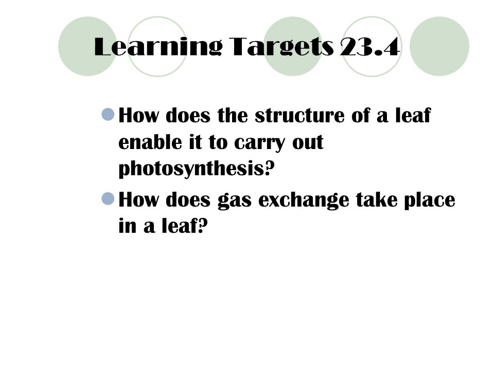 Learning Targets 23.4 How does the structure of a leaf enable it to carry out photosynthesis.
