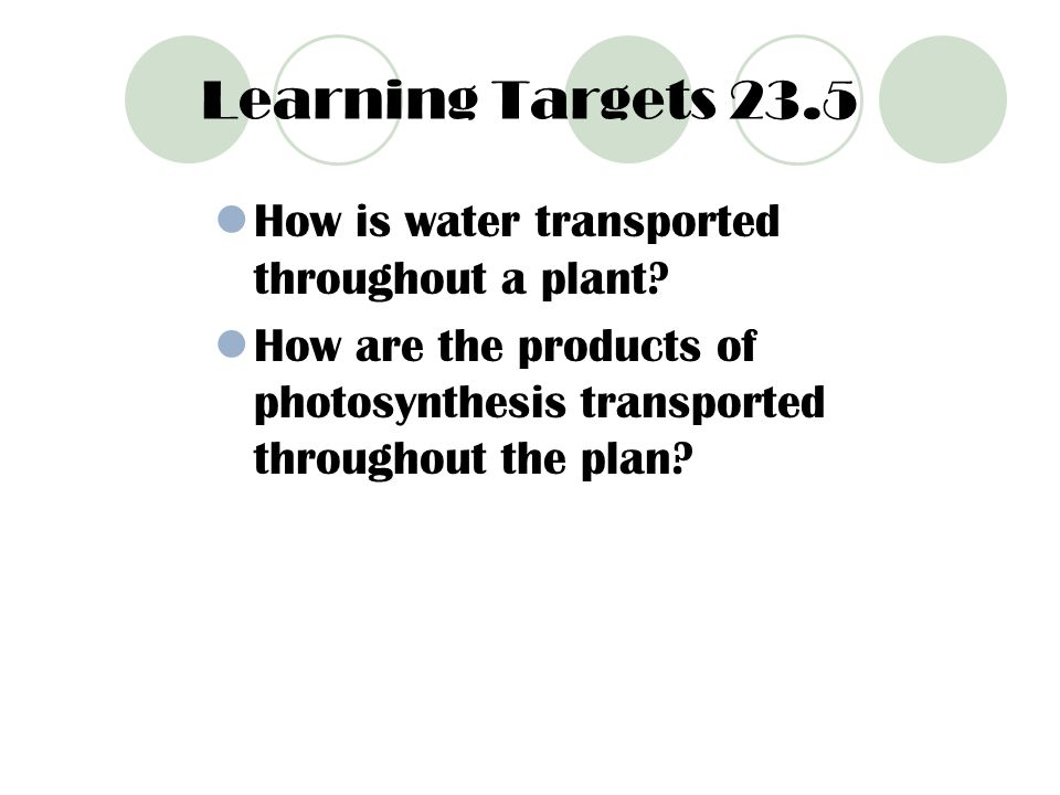 Learning Targets 23.5 How is water transported throughout a plant