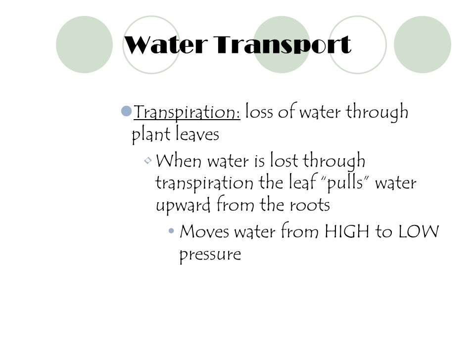Water Transport Transpiration: loss of water through plant leaves