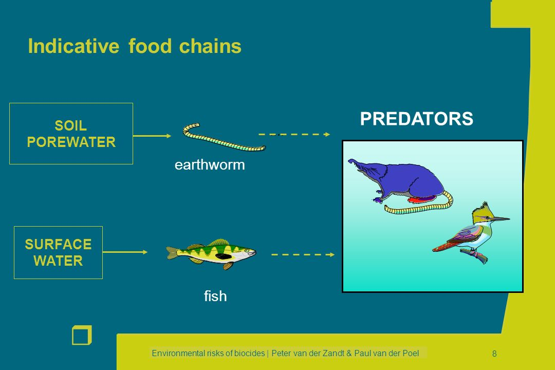 Indicative food chains