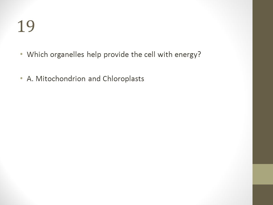 Which Organelle Helps Provide Cells By Making The Cells Food