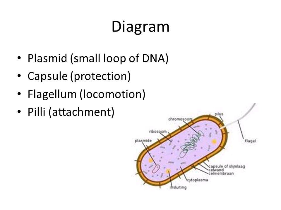 archaea and eubacteria Kelompok ini dianggap sebagai organisme hidup primitif di planet ini meskipun archaea dan eubacteria dianggap sebagai dua kelompok, mereka adalah organisme prokariotik.