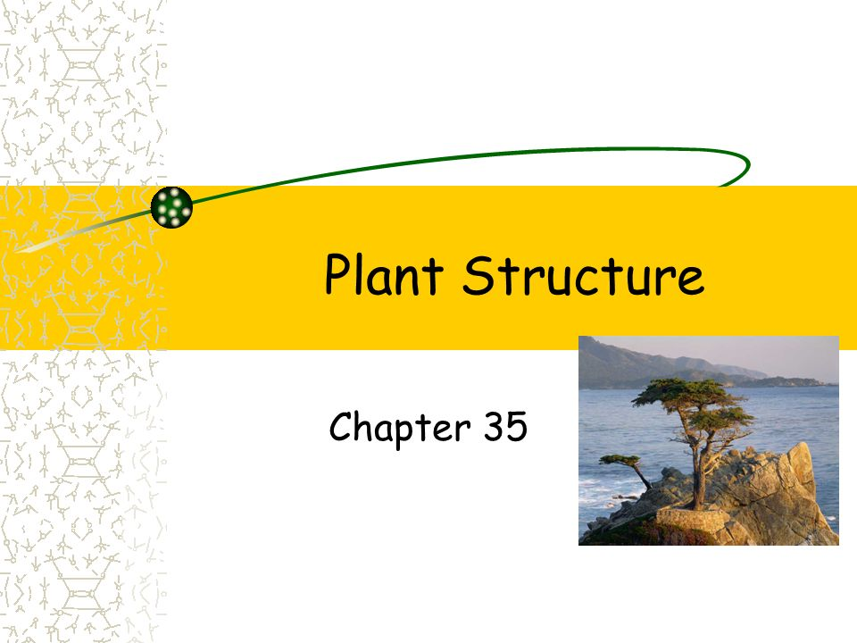 Plant Structure Chapter 35