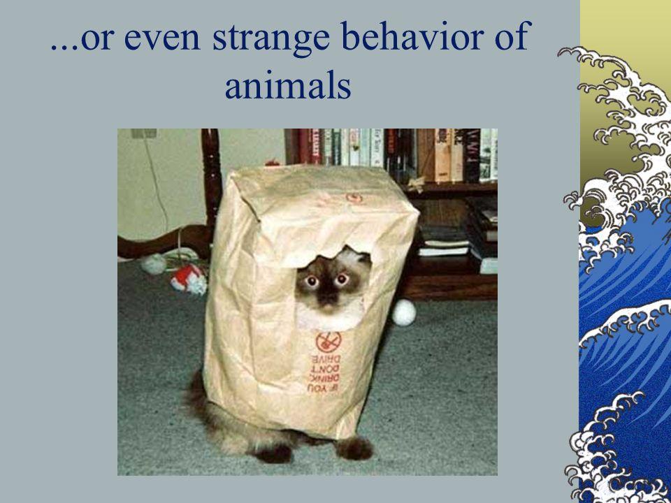 ...or even strange behavior of animals