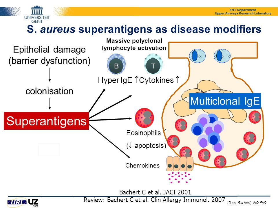 S. aureus superantigens as disease modifiers