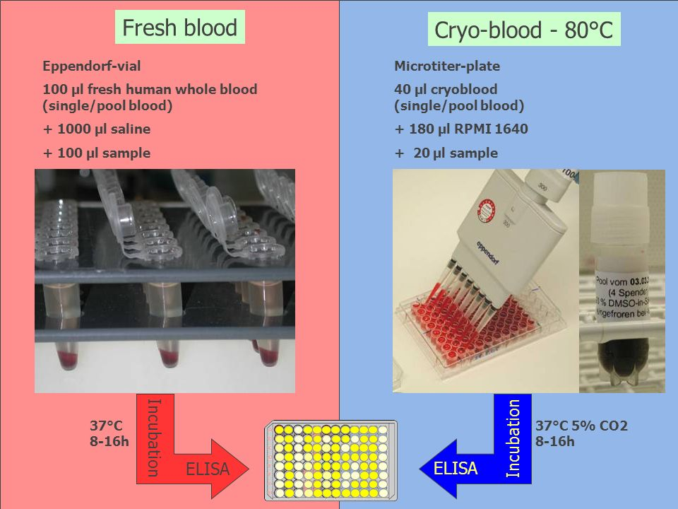 Fresh blood Cryo-blood - 80°C Incubation ELISA Eppendorf-vial