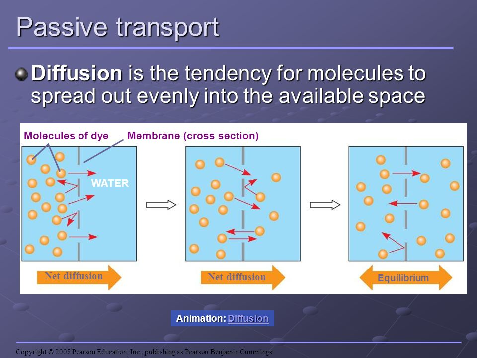 Passive transport Diffusion is the tendency for molecules to spread out evenly into the available space.