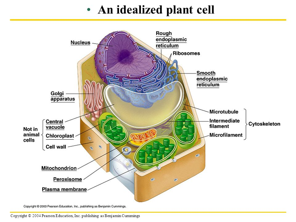 Plant Cell Biology NEW EDUCATION CLASSROOM SCIENCE BIOLOGY POSTER ...