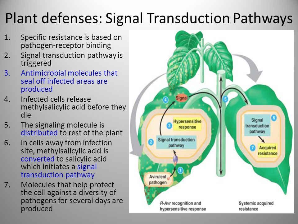 signal transduction pathway worksheet the best and most comprehensive worksheets. Black Bedroom Furniture Sets. Home Design Ideas