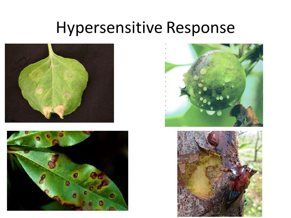 innate immunity signaling in plants