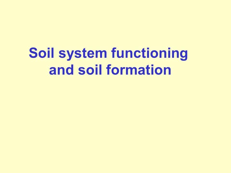 Soil system functioning