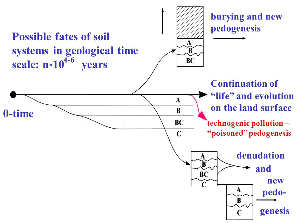 Possible fates of soil systems in geological time scale: n*10 years