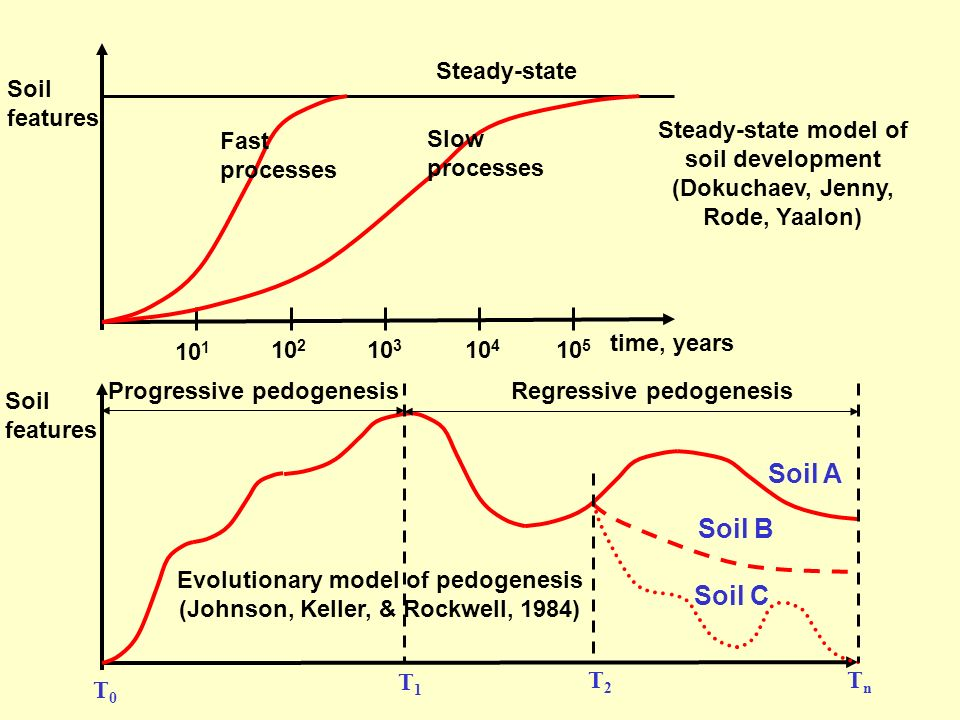 Soil A Soil B Soil C Steady-state Soil features Steady-state model of