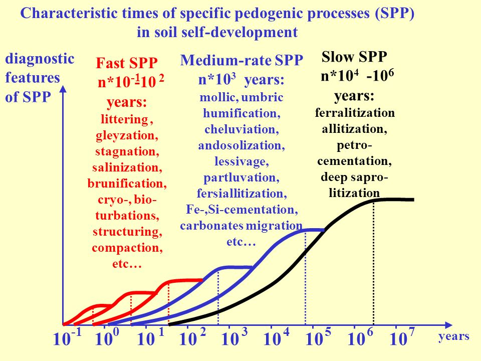 Characteristic times of specific pedogenic processes (SPP) in soil self-development