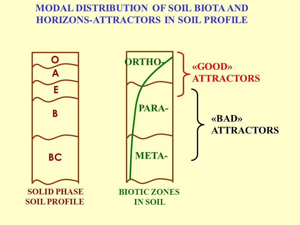 MODAL DISTRIBUTION OF SOIL BIOTA AND HORIZONS-ATTRACTORS IN SOIL PROFILE