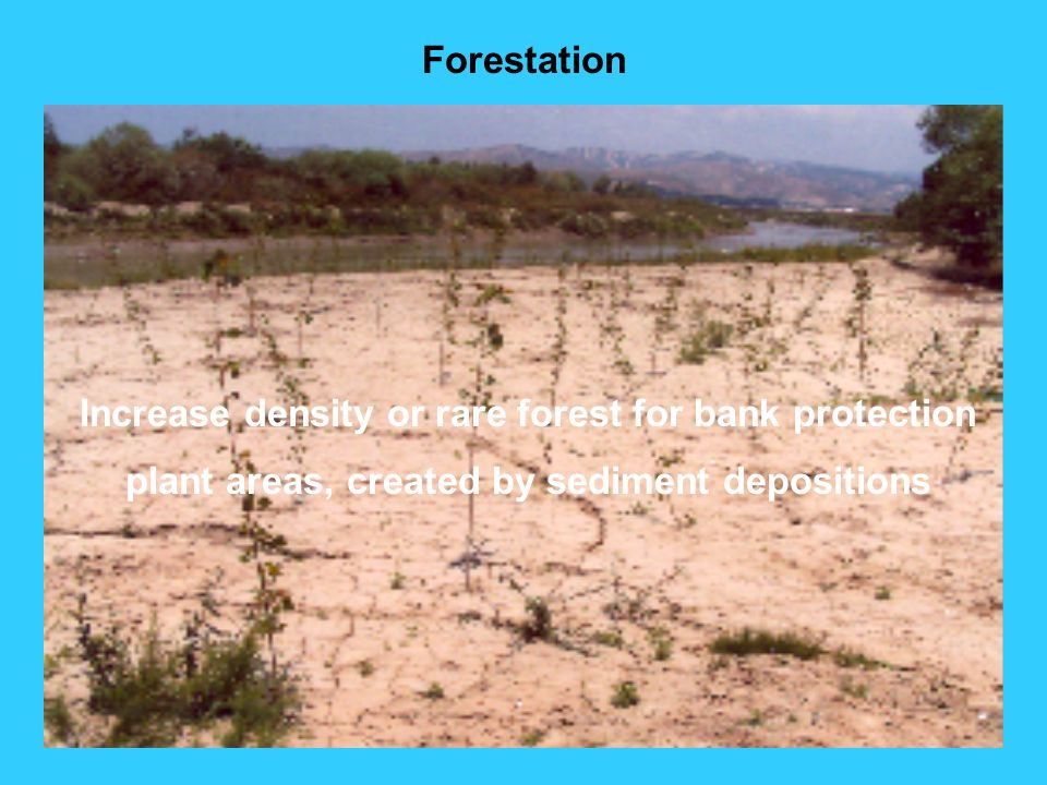 Increase density or rare forest for bank protection
