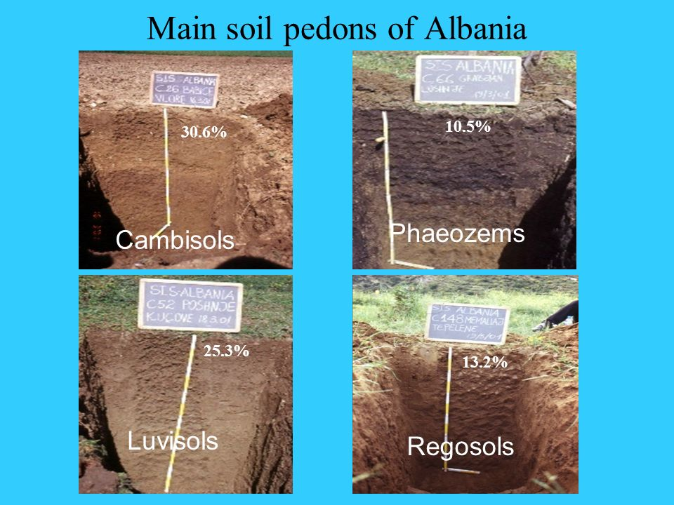 Main soil pedons of Albania