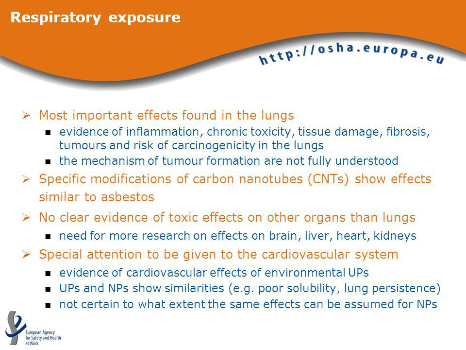 Respiratory exposure Most important effects found in the lungs