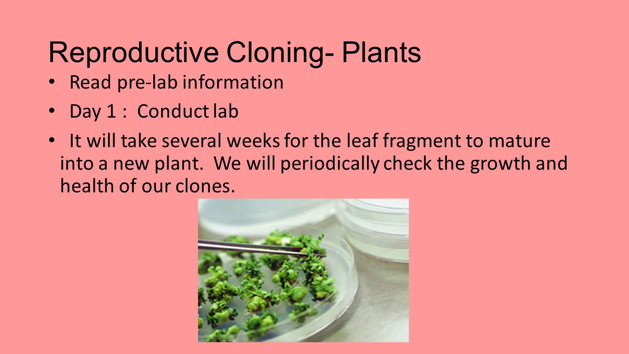 reproductive cloning Reproductive cloning uses could also include the production of organisms with specific characteristics, such as drug-producing animals or genetically unique animals.