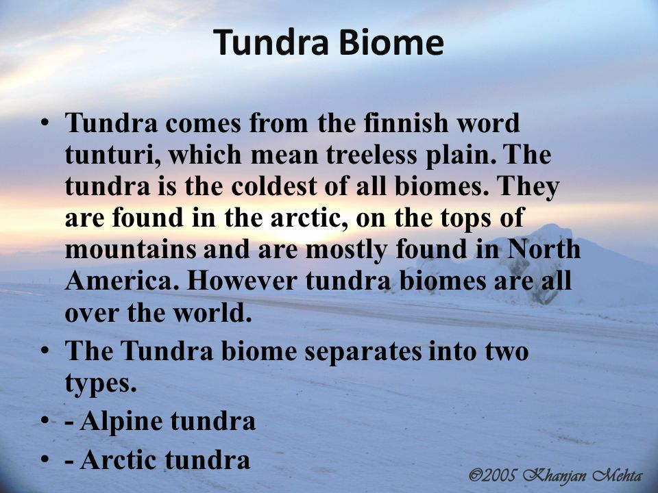 arctic tundra biome essay Biome in a baggie the distribution of background essay print some of the major biomes are the arctic tundra, desert, grassland.