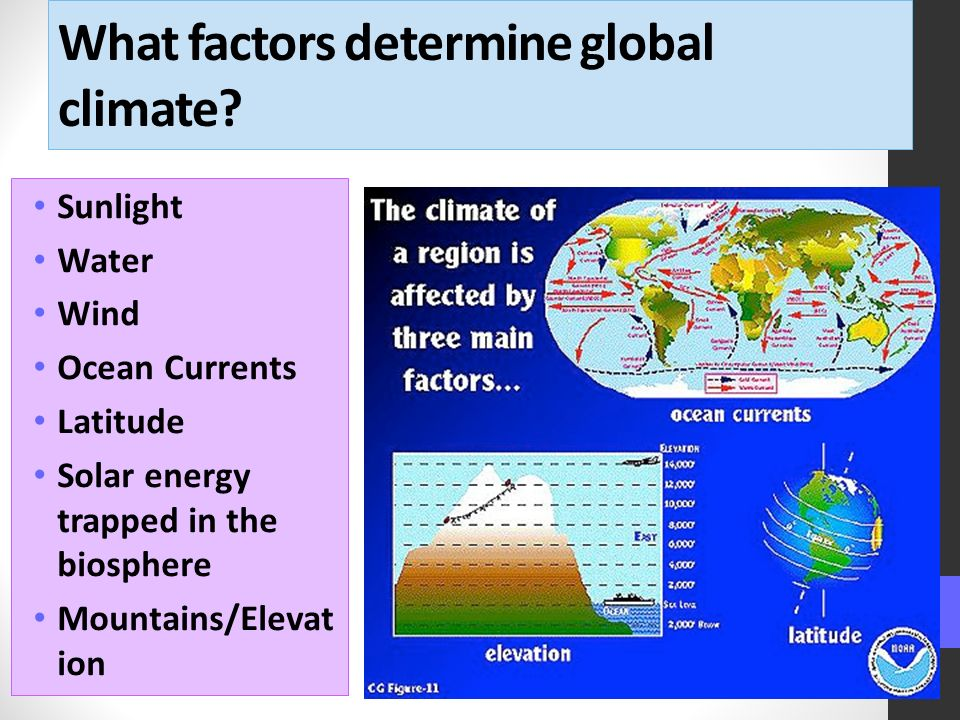 What factors determine global climate