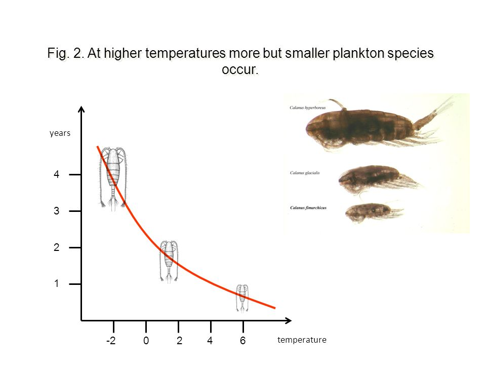 Fig. 2. At higher temperatures more but smaller plankton species occur.