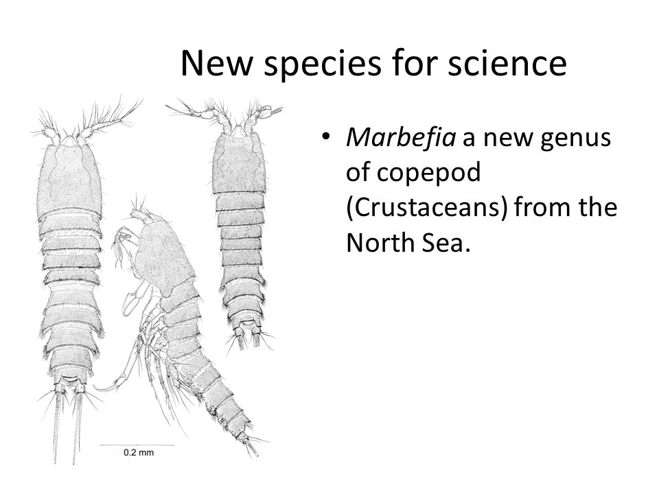 New species for science