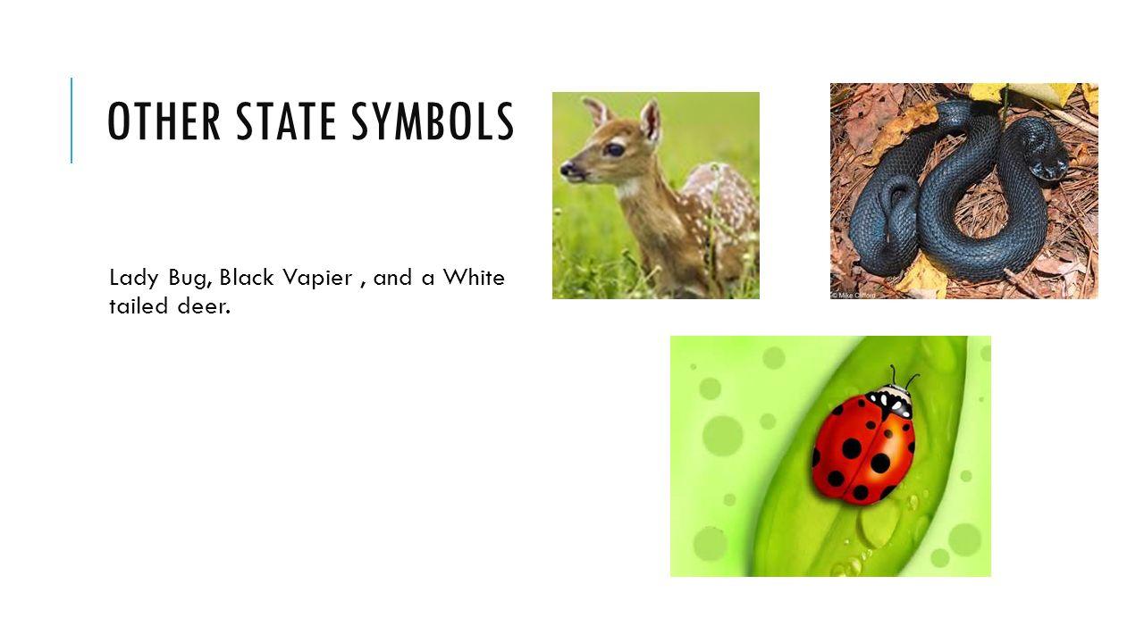 Ohio ohio samantha samantha ppt video online download 9 other state symbols lady bug black vapier and a white tailed deer buycottarizona