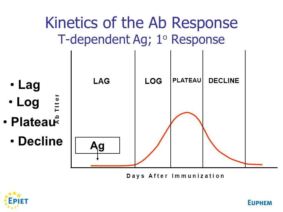 Kinetics of the Ab Response T-dependent Ag; 1o Response
