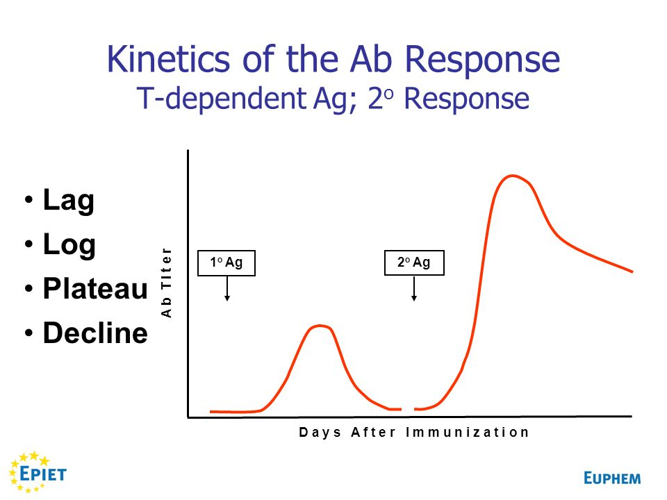 Kinetics of the Ab Response T-dependent Ag; 2o Response
