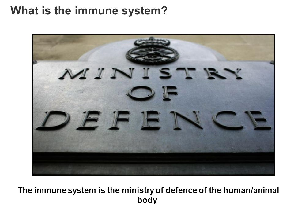 The immune system is the ministry of defence of the human/animal body