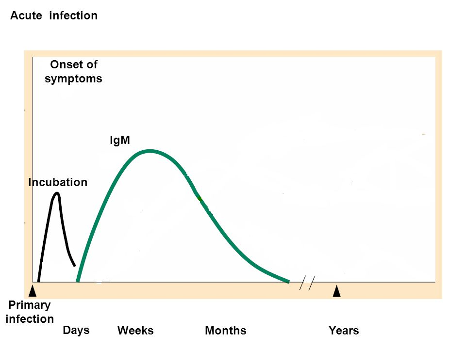 Acute infection Onset of symptoms IgM Incubation Primary infection Days Weeks Months Years