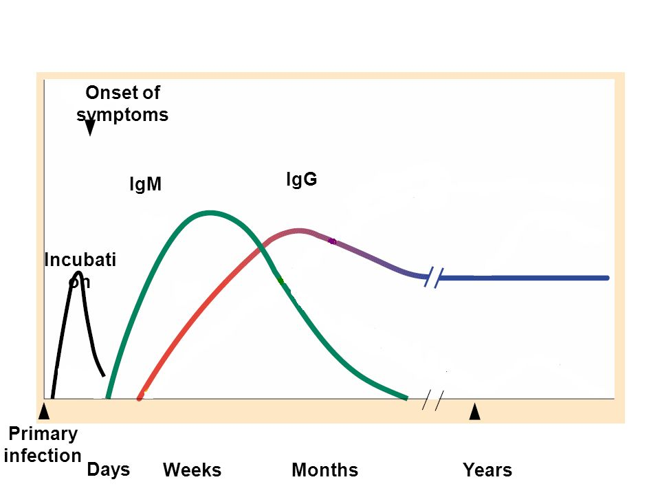 Acute virus infection Onset of symptoms. IgG. IgM. Incubation. Primary infection. Days. Weeks.