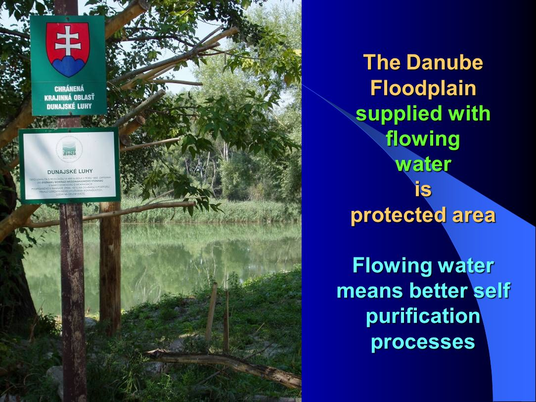 The Danube Floodplain supplied with flowing water is protected area Flowing water means better self purification processes