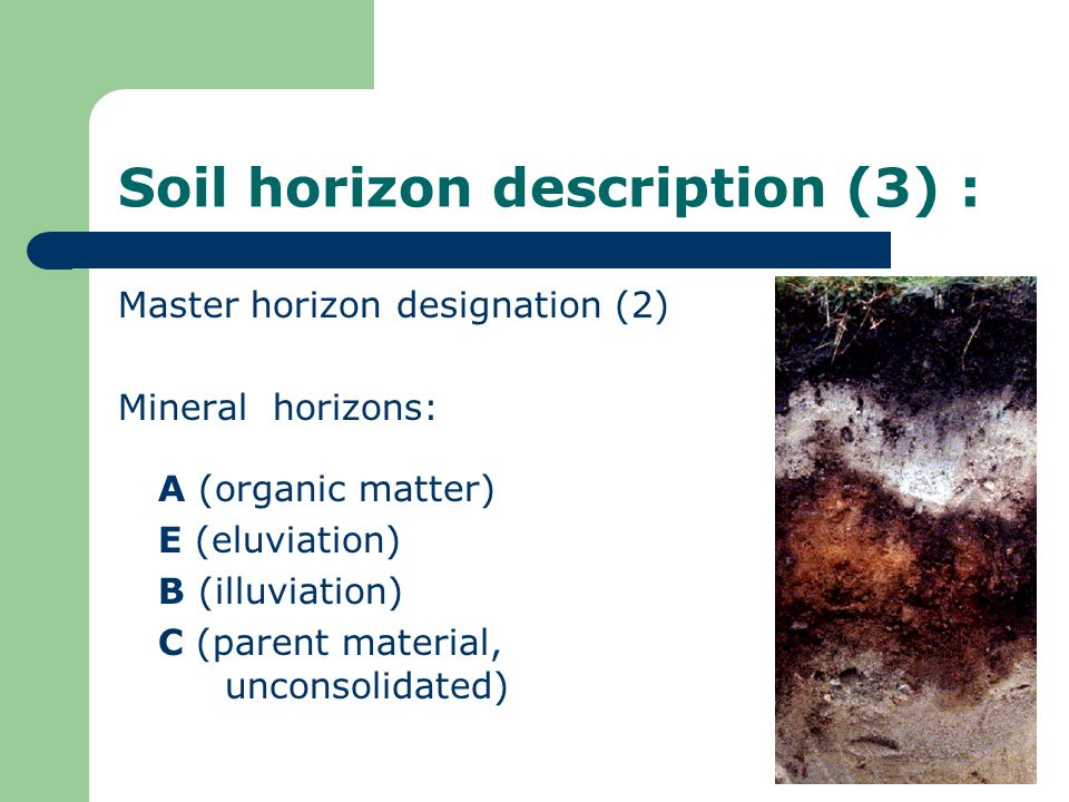 Soil horizon description (3) :