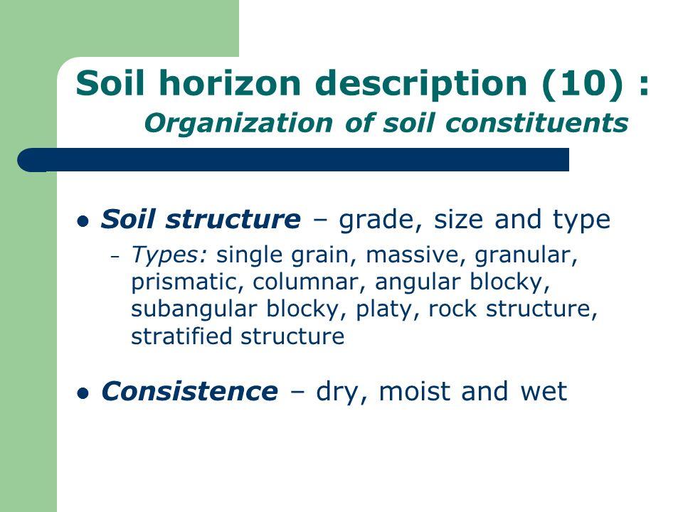 Soil horizon description (10) : Organization of soil constituents