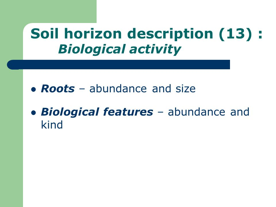 Soil horizon description (13) : Biological activity
