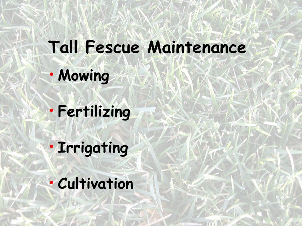 Tall Fescue Maintenance
