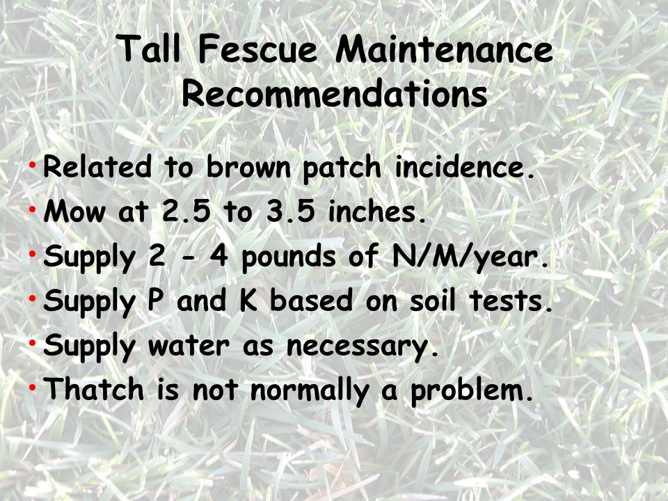 Tall Fescue Maintenance Recommendations